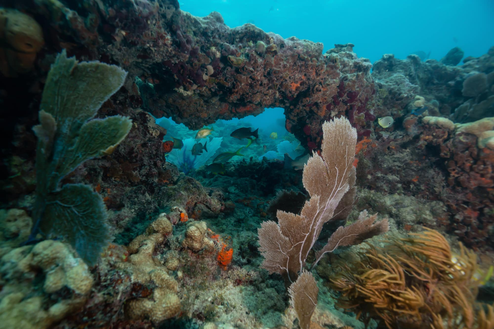 Коралловый Риф Флорида