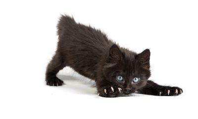 укус котенка