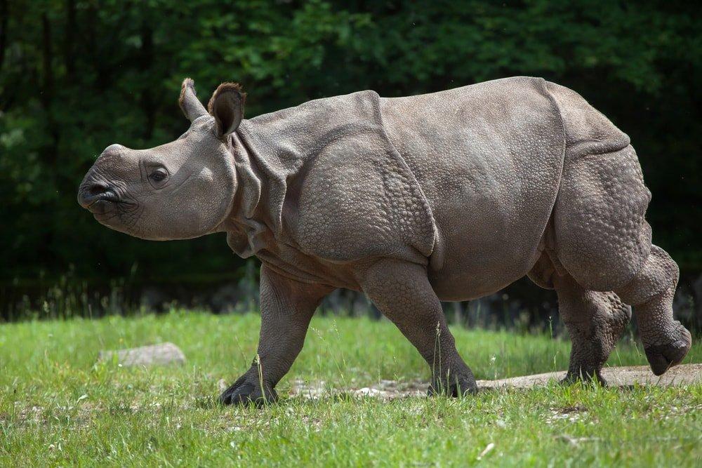 зоопарке Майами