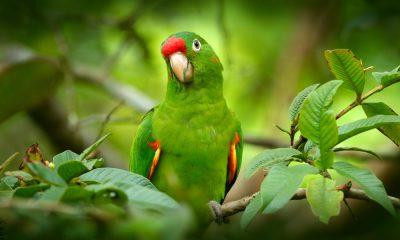 попугай-наркодилер