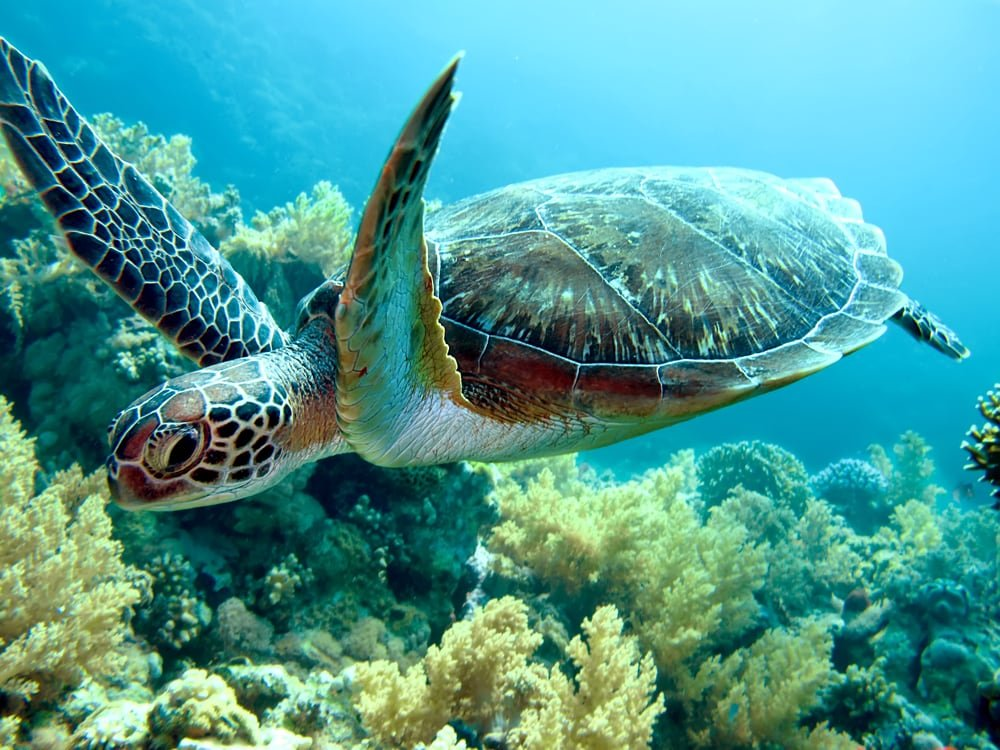 больную черепаху