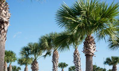 пальмы Флориды