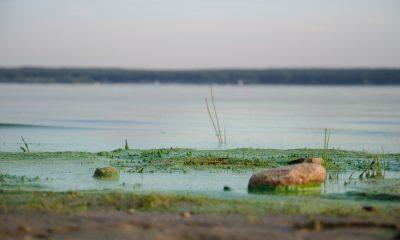 водорослями