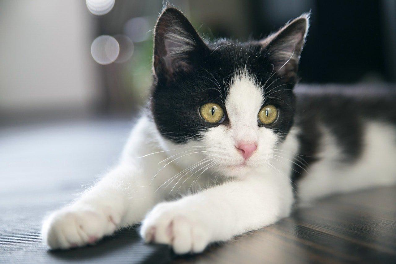 кошкам когти