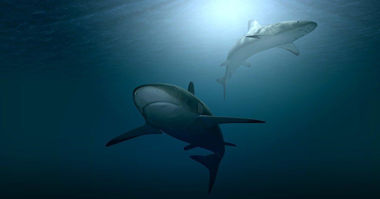 акулами