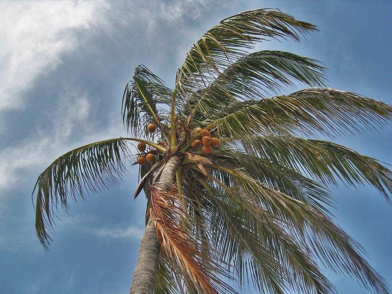 сезон ураганов во Флориде