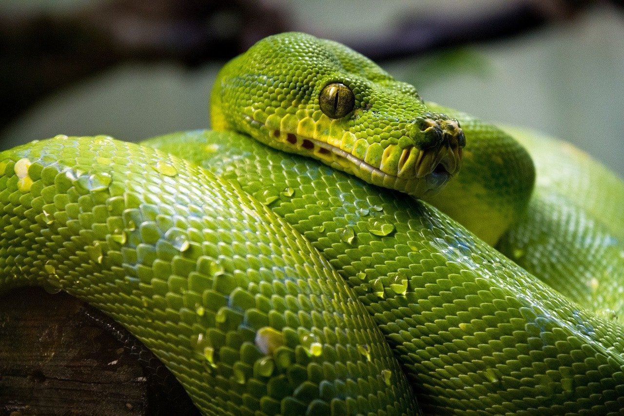 охотники на змей
